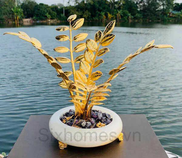 Chậu cây Kim tiền mạ vàng đẹp